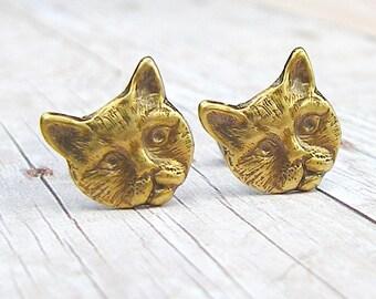 Kitten - antique brass post earrings