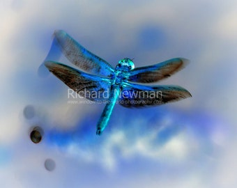 Shades of Blue, Dragonfly, nature art, 11 x 14 photograph,