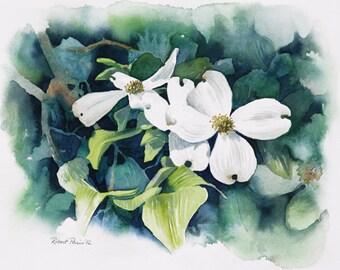 Dogwood Blooms. Original Watercolor, 16 x 12, FREE SHIPPING