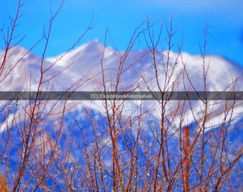 "Winter ""Mountain Branches"" Fine Art Photograph"