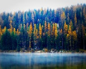 Montana Fall Photo Larch Tree Photo Tally Lake Yellow Forest Woods Cabin Lodge Decor Autumn Rustic Photography OOAK OFG Team FTTeam