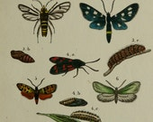 1854 Antique print of INSECTS, different species. Butterflies. Moths. Mosquitoes. Flies. ENTOMOLOGY. 162 years old rare engraving