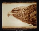 Golden Eagle - Woodburning