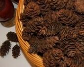 """Douglas Fir pinecones 2"""" - 3"""" - 50 cones"""