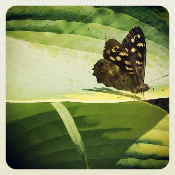 Nature miniature photography brown butterfly on green leaf - Brown butterfly meaning money ...