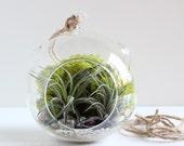 Hanging Terrarium Kit || Geode + Pyrite Terrarium Kit with Two Air Plants || Large