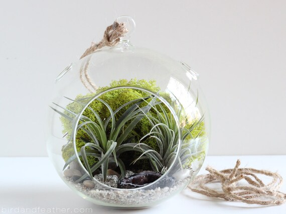 Hanging Terrarium Kit || Geode + Pyrite Terrarium Kit with Two Air Plants || Large