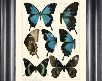 BUTTERFLY PRINT SEITZ  Botanical Art Print 11 Beautiful  Blue Green Butterflies Ulysses, Autolycus, Laglaizei Summer Garden Nature