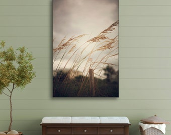 Wild Oats to Sow - Gallery Wrap Canvas - wall, photograph, photography, art, decor, hanging, beach, coast, coastal, cottage, natural, chic,