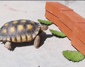 Tortoise Food Etsy
