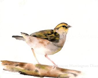 Grassland Sparrow ORIGINAL nature watercolor painting - 8x10 Watercolor - Bird Painting