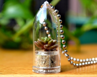 Little Gemstone Live Terrarium Necklace / Terrarium Jewelry / Girlfriend Gift / Succulent Plant