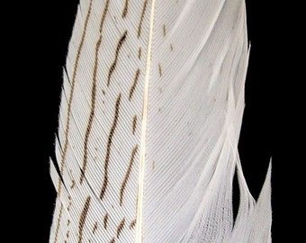 "Silver Pheasant Feathers.  8/10"" (21-25cm) .  UK Supplier"