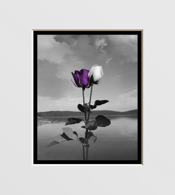 Black And White Purple Rose Lake Wall Art By Littlepiephotoart