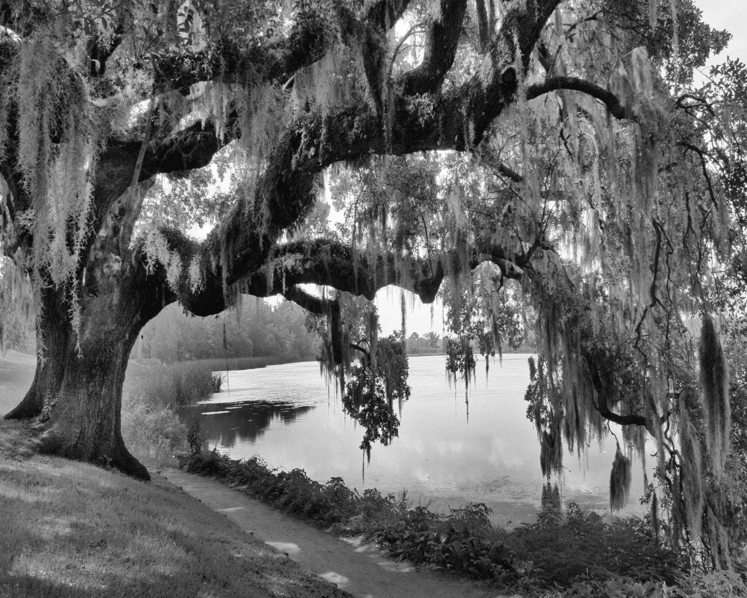 black white willow tree wall art photography home decor matted. Black Bedroom Furniture Sets. Home Design Ideas