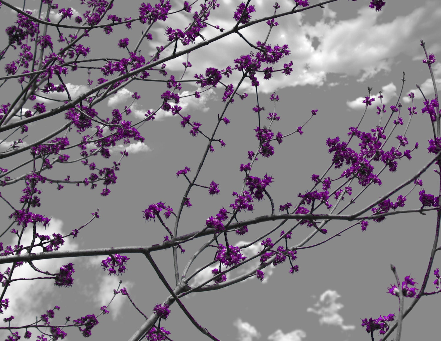 Gray Purple Flower Blossom Tree Branch Wall Art Home Decor