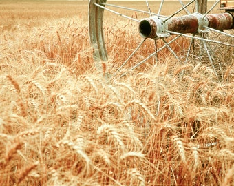 Rustic Photography, wheat, wheat field, wheat harvest, rustic, amber, amber waves of grain, farm life, Country Home Decor, Fine Art Print