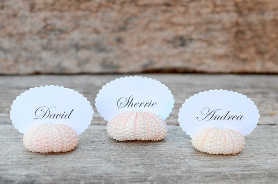 50 Sea Urchin Shell Place Card Holders for Beach Wedding - Natural Pink - Reception Table Decor - Guest Escort Favor