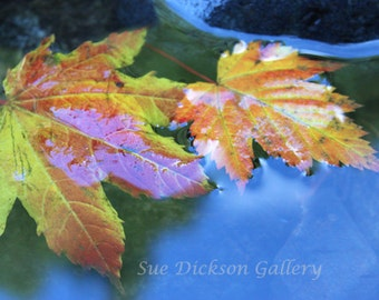 Fall Maple Leaves in Reflective Pool Digital Fine Art Photography