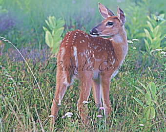 Deer print: white tail deer decor 11x14 deer fawn hunting art art for the baby room
