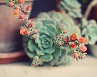 IN BLOOM photography print, romantic pink and green succulent wall art, 8x12