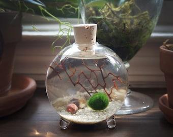 Marimo Moss Ball Globe Terrarium
