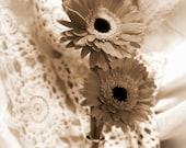 Cream Tone Gerber Daisy - PittsPartyOf5
