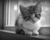 Kitten Photo, Animal Photography, Baby Animals