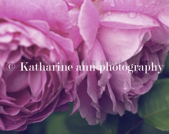 flower photography / nature photography / roses / buffalo photography
