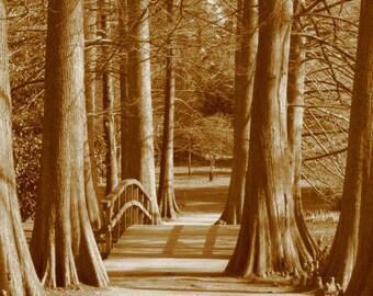 Swan Lake, Sumter SC, Cypress Tress, Pathway