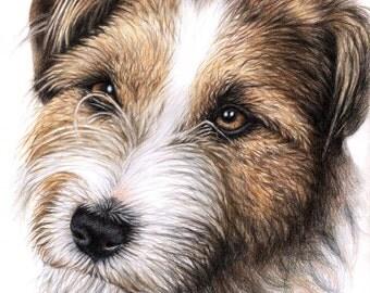 Jack Russell Terrier Portrait - Fine Art Print