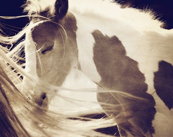 Foal Sleeping, FREE GIFT, Sepia Tone, Horse, Young Horse, Paint Horse, Foal Print, Foal Photo, Horse Photo, Horse Print