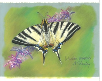 Print of an original pastel drawing of a butterfly