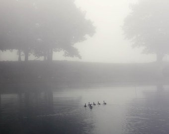 ducks lake water fog mist bathroom decor office decor landscape photography home decor