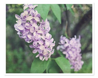 Spring Wall Art, Lilacs Photography, Flower Photograph, Soft Purple Rustic Decor, Nature Photography, Pretty Whimsical, Floral Feminine