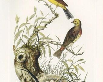 Yellow Bunting Bird Print Book Plate SALE Buy 3, get 1 free