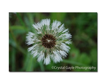 Fine Art Photography Print ~ Dandelion Seeds ~ Floral, Green, White, Bathroom Decor, Entrance, Office, Gift for Her, 8x10 8x12 11x14 12x18""