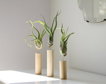Popular items for mounted air plants on etsy for Air plant art