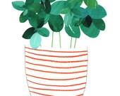Basil Plant Giclee Print