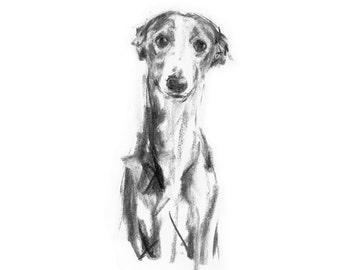 Whippet Charcoal Drawing  - fine art dog print - whippet gift