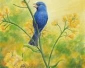 "Bluebird singing in a field of yellow mustard, blue bird, nature - Art Reproduction (Print) - ""The Bluebird of Happiness"""
