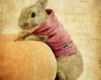 Rabbit photo, halloween decor, animal photography, kids room wall art, rabbit nursery print, vintage postcard