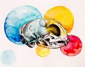 Cat Skull - Original Watercolor and ink painting