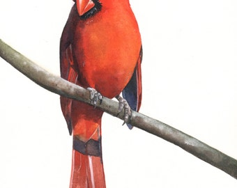 Cardinal painting BIRD ART ORIGINAL watercolor painting, bird art, wall art, home decor