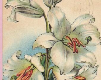 """Ca. 1908 """"Lilies"""" Easter Greetings Postcard - 111"""