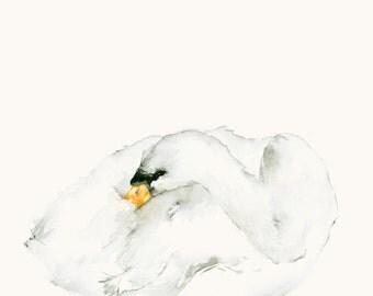 Watercolor Artwork Original Sleeping Swan