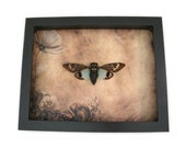 Framed Insect 3D Wall Hanging Framed Art Home Decor