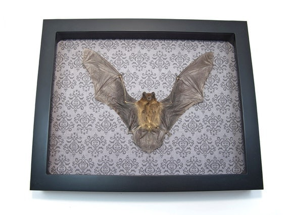 Goth home decor taxidermy displays oddities art by bonejewelry Oddities home decor