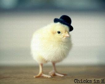 Chicks in Hats Chicken in A Black Derby Hat Rigid Refrigerator Magnet