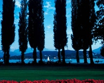 Art print photograph Archival pigment print. Lake Lucerne, Switzerland view of the lake beyond the pines and gardens by Damian Hevia.